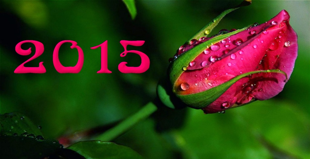 Imagen feliz ano 2015 rosa 1024x528 Feliz Año 2015