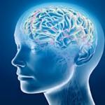 Cerebro y Arterias dos